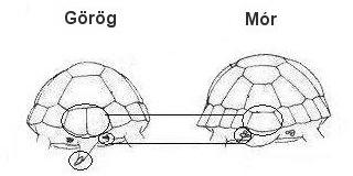 Görög- és mór teknős különbségei