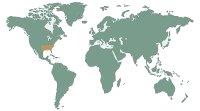 Keselyűteknős - (Macroclemys temmincki)