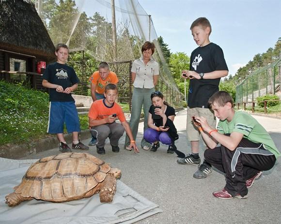 Már nyaral a sarkantyús teknős