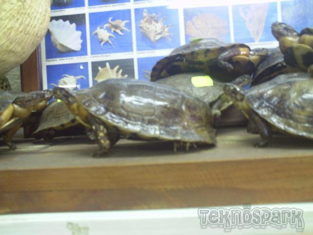 Utazási szezon - teknősök a poggyászban