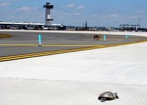 Teknősök okoztak fennakadást a New York-i reptéren