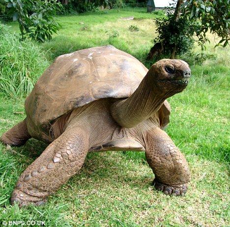 A világ egyik legidősebb állata 178 éves