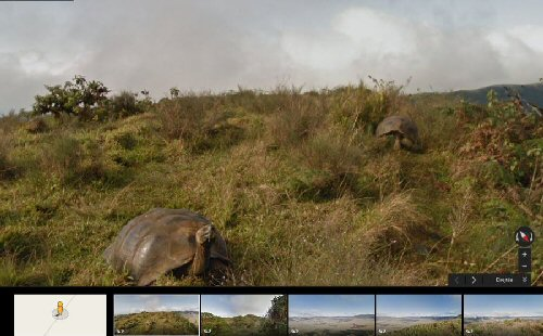 Galapágosi teknőcöket mutat a Street View